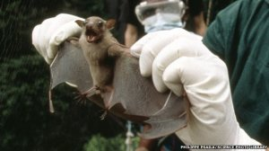 First Ebola boy likely infected by playing in bat tree
