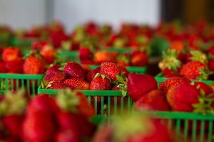 Toxic Pesticides and Strawberries